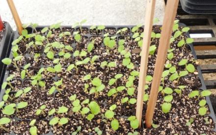 Timely tips for seedling care