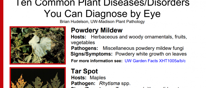 Ten Common Plant Diseases/Disorders You Can Diagnose by Eye