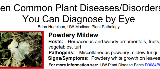 Ten Common Plant Diseases / Disorders You Can Diagnose by Eye
