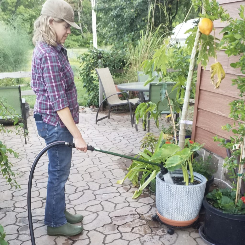 image of woman watering plants