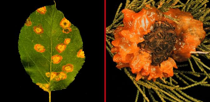 Image of diseased leaves