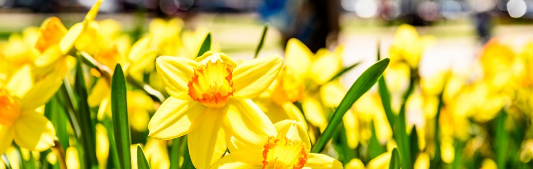 Image of flowers in spring
