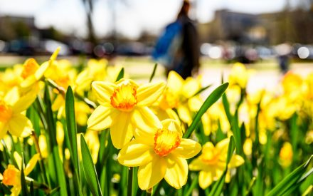 Plant Bulbs Now for Spring Color