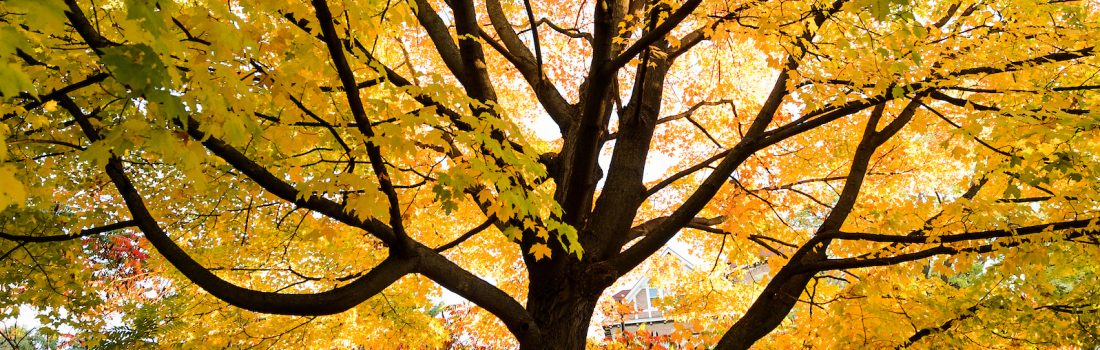 Photo wit a tree in autumn leave color
